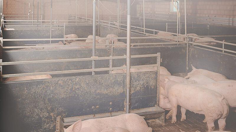 Stallklima: CombiCool für den Schweinemast (301 KB)