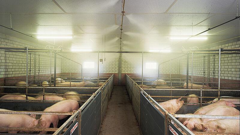 Schweinehaltung: Hochdruck-Verneblungssystem CombiCool